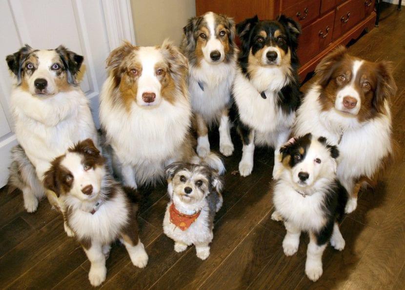 Perros adultos