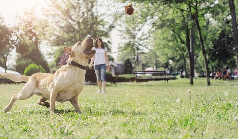 Como adiestrar a un perro