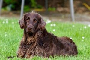 Los perros son los animales que forman parte de las especies que tienen la genética con mayor variedad del mundo