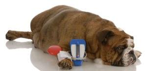 perro con enfermedad de insuficiencia