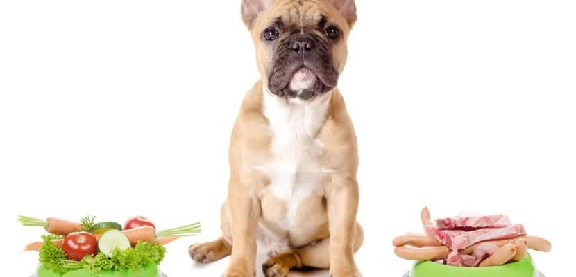 La alimentación es clave en los perros diabéticos