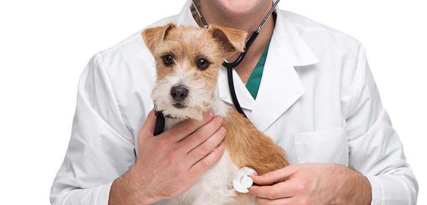 Cuidar la salud del estómago del perro