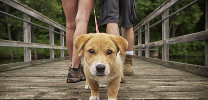 Paseos con el perro