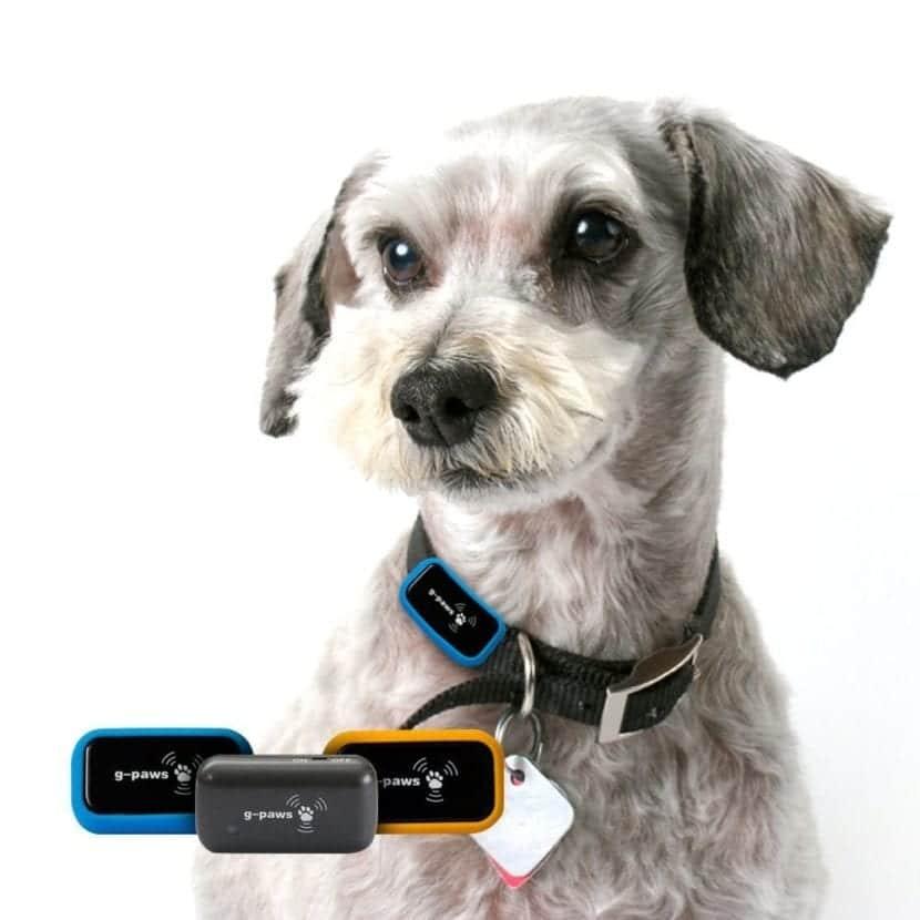 Perro con collar localizador