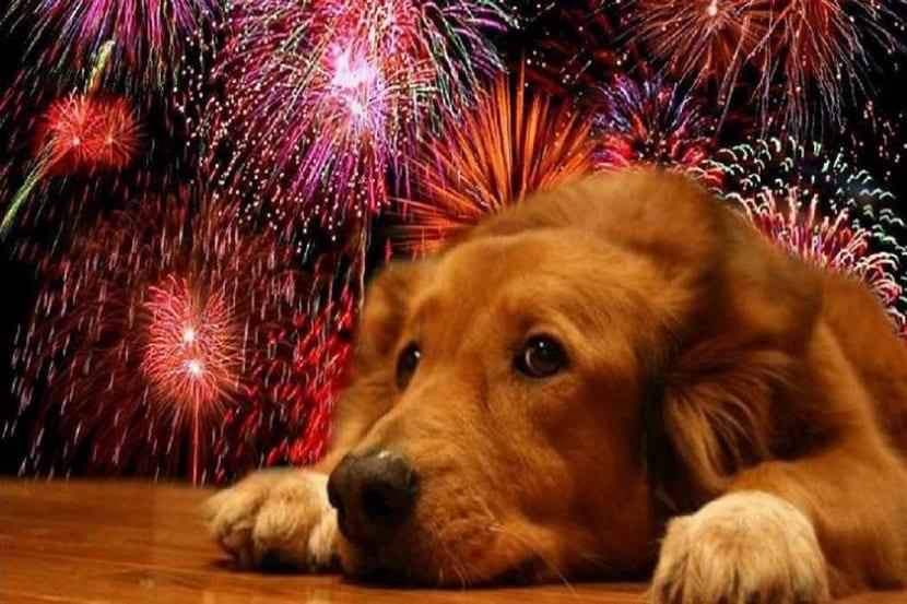 Calmar a un perro asustado por los fuegos artificiales