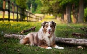 cuidado con las espigas y los perros