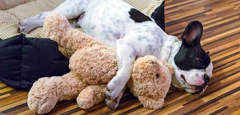 Juguetes para el perro solo en casa