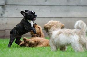 La comunicacion de un perro a traves de los gruñidos