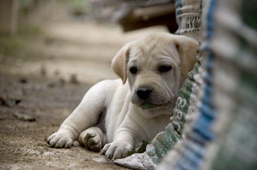 si crees que tu perro a sido envenenado,es necesario que llevemos a nuestro perro ante un veterinario.
