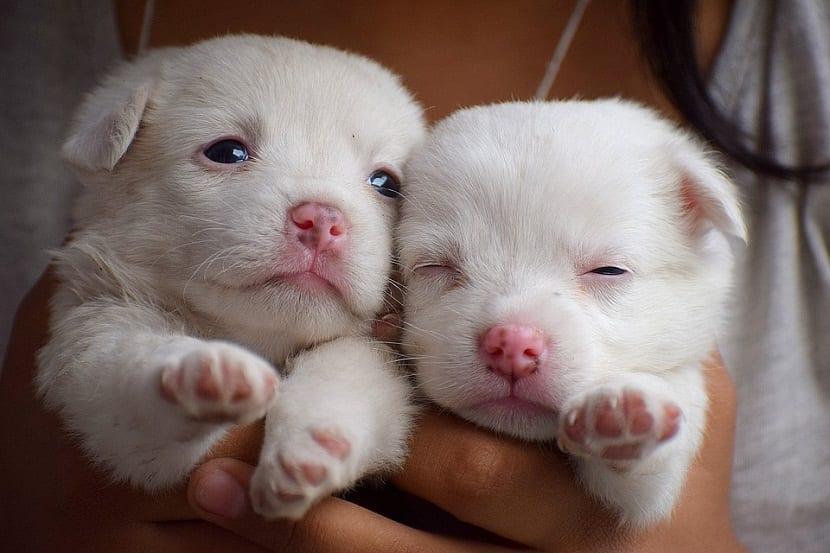 Para sacar a un cachorro adelante es de vital importancia que contemos con la ayuda de un profesional