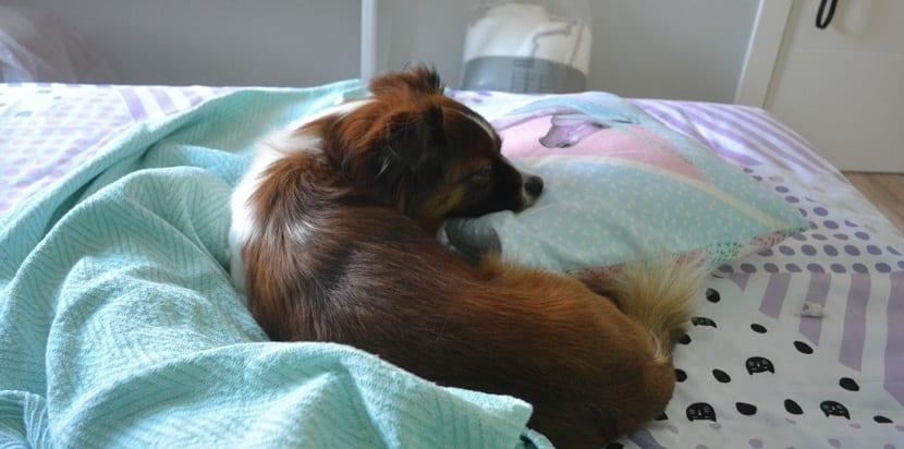 informacion necesaria para explicar la razón de porqué mi perrito vomita y a la vez tiene diarrea