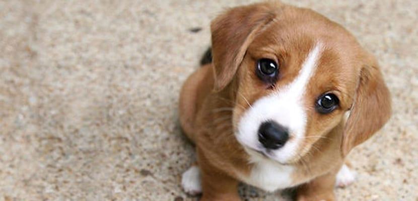Enfermedades de cachorros