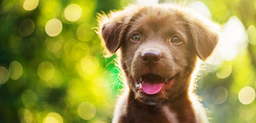Enfermedades de cachorros sin madre