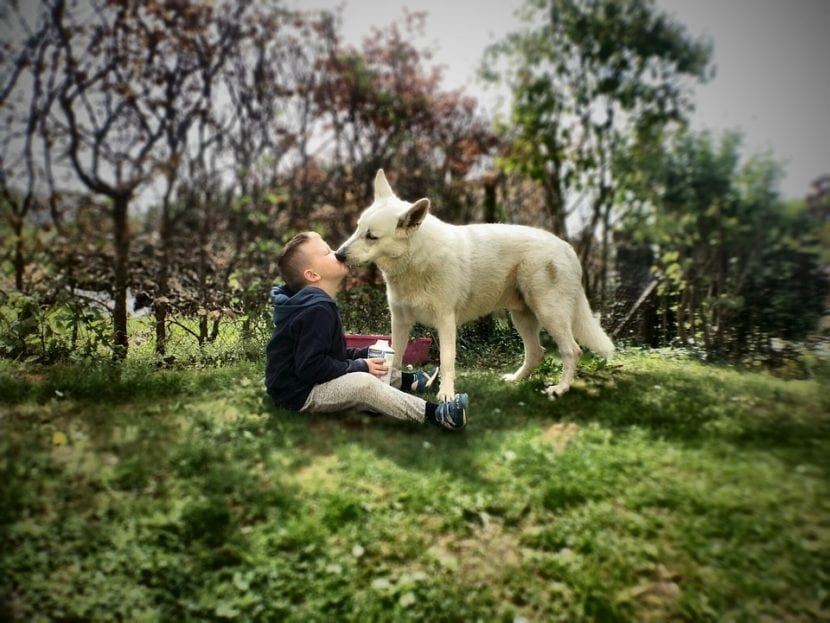 Perro cariñoso con niño