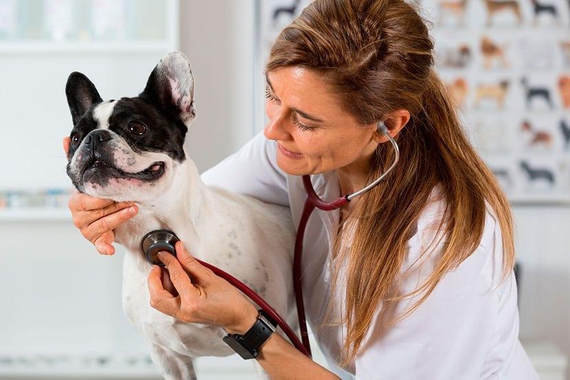 La insuficiencia cardiaca en perros puede aparecer por diferentes motivos