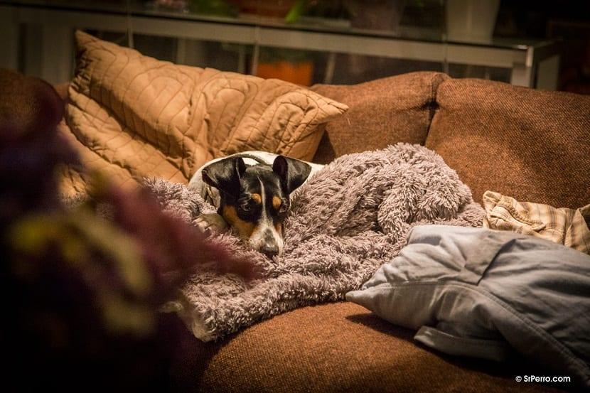 diarrea y vomitos en perros