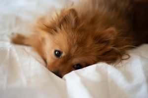 Si tu perro vomita y tiene diarrea llévalo al veterinario