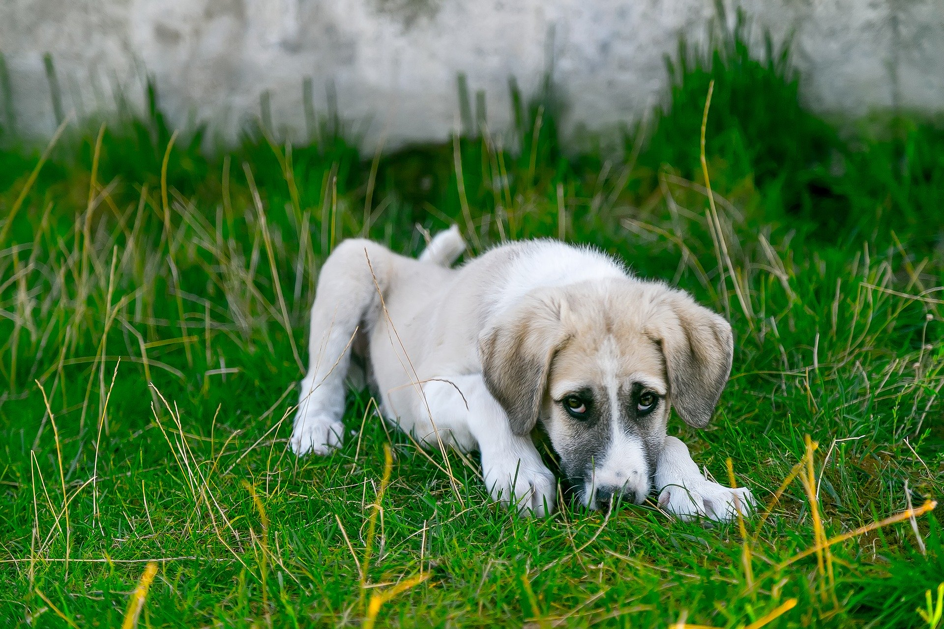 Los perros jóvenes han de recibir mucho cariño si tienen dolor de estómago