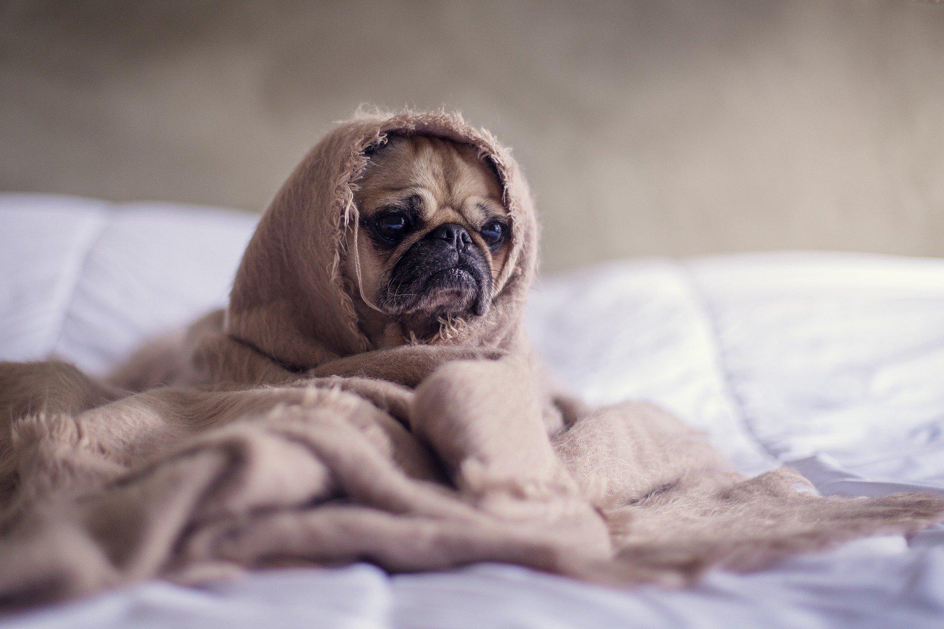 Los vómitos en perros son síntomas de alguna enfermedad