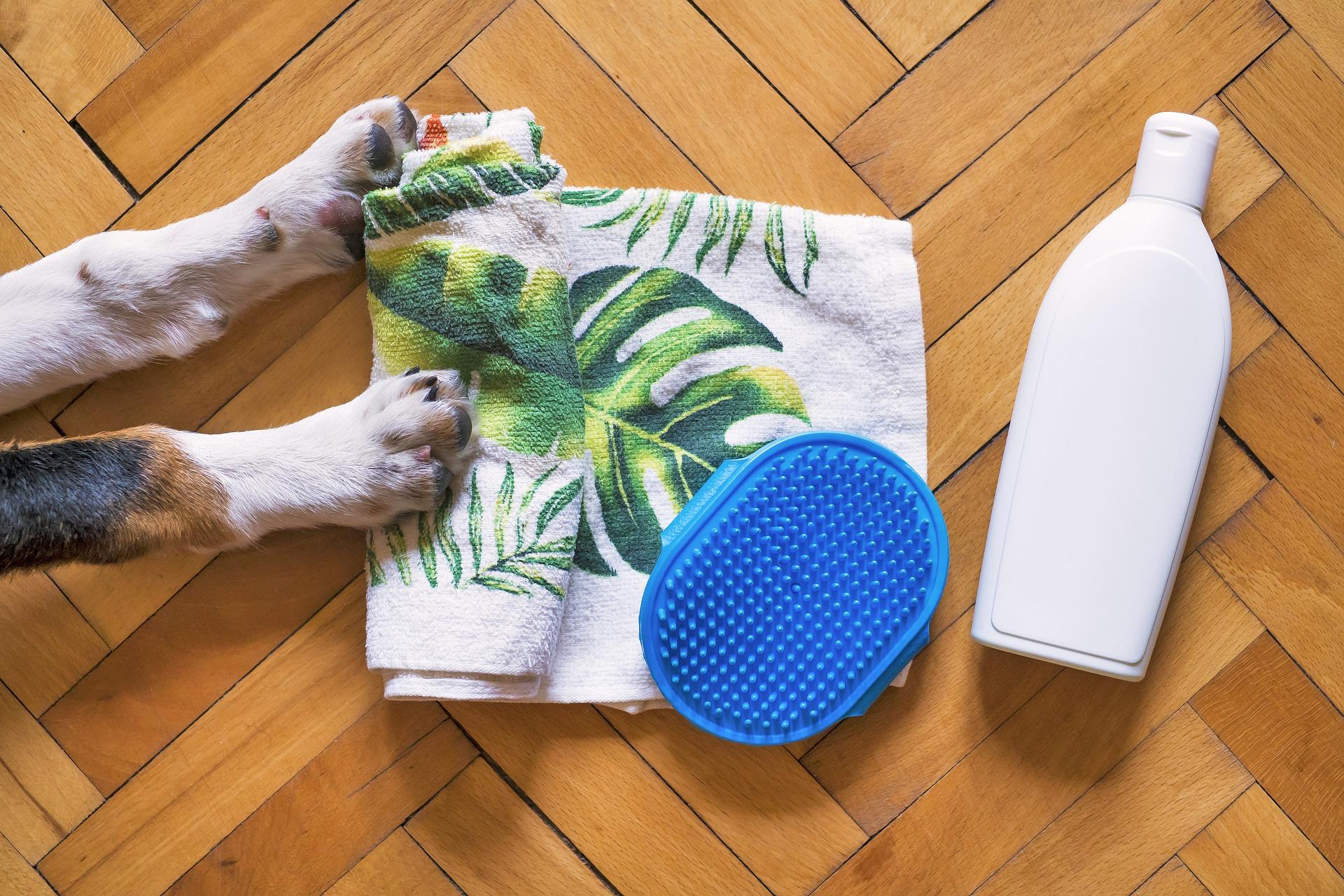Baña a tu perra en celo con calma
