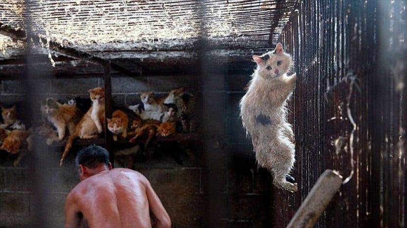 Los perros no son los únicos animales que mueren en este festival