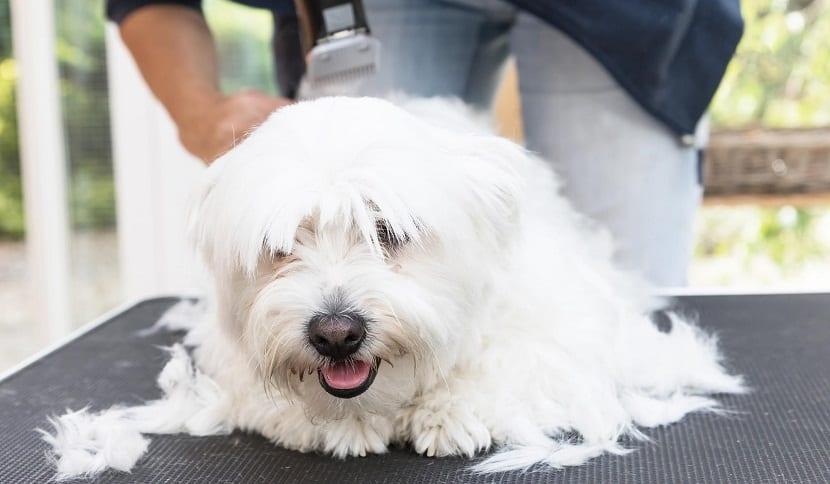 Consejos para controlar la muda de pelo en los perros