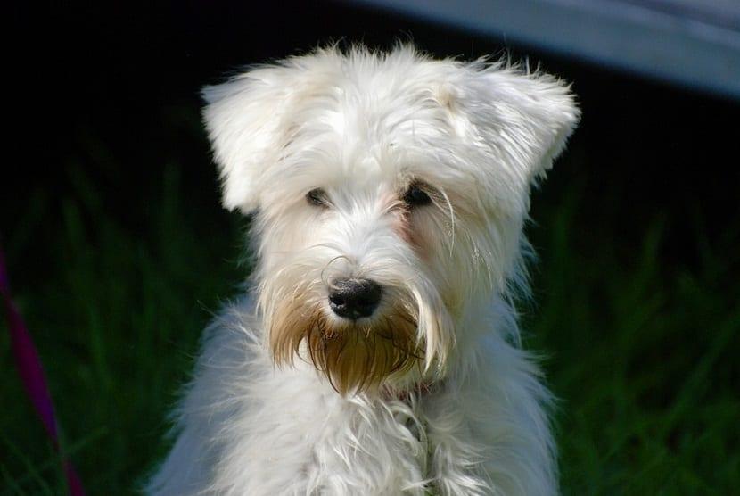 Como tratar los tumores hormonales en los perros