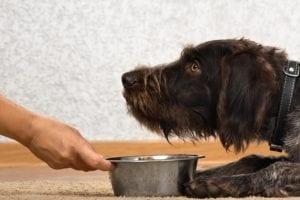 Las enfermedades que afectan tanto al estómago como a los intestinos en los perros son más comunes de lo que pensamos