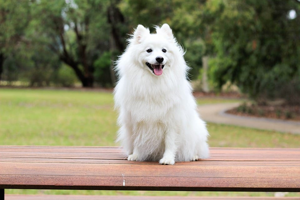 Perro sentado con hipo
