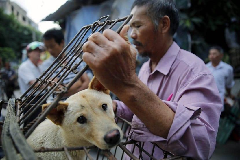 Cada año, miles de perros son sacrificados y servidos como un manjar en una ciudad llamada Yulin