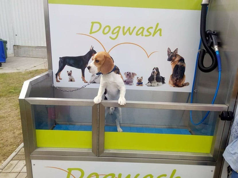 La higiene es muy importante para las mascotas, ya que una piel y un pelaje sanos dependen enormemente de un buen aseo