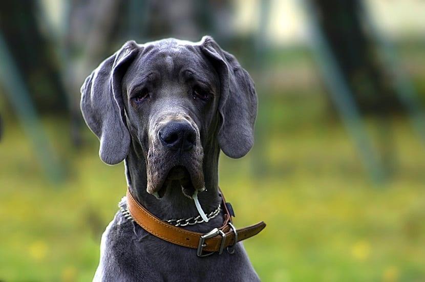 Hay que visitar al veterinario regularmente cuando nuestro perro es mayor