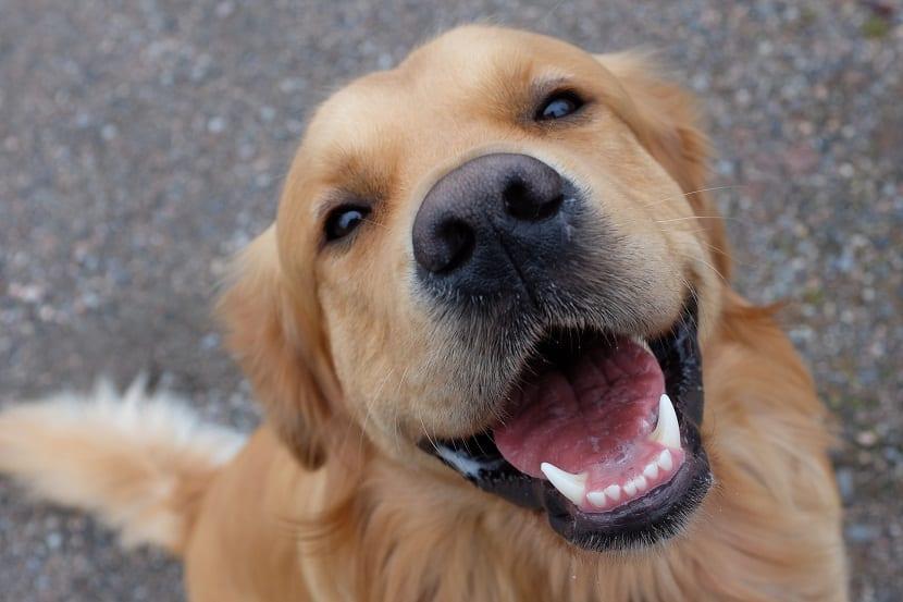 la importancia de una sonrisa sana en nuestro perro