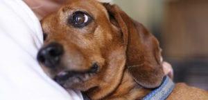 perros que demuestran cariño