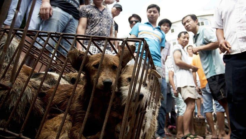 polemico festival realizado en Yulin