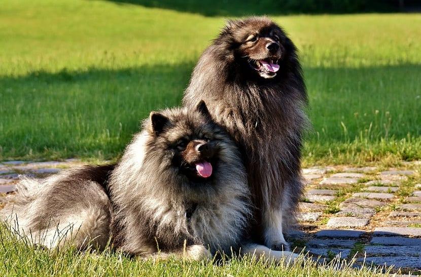 las alergias causan la caida del pelo de los perros