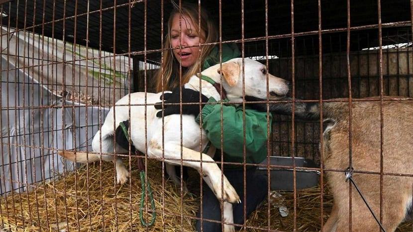 Los grupos de derechos de los animales creen que los perros son robados