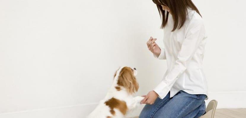 Adiestrar al perro