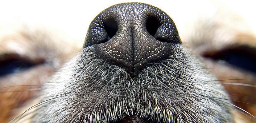 Sequedad en la nariz