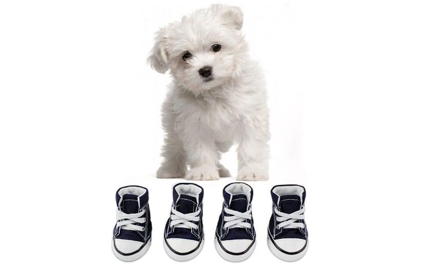 botas antideslizantes para cachorros con suela de goma