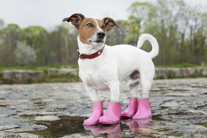 botas para perros y para que no se mojen con el agua