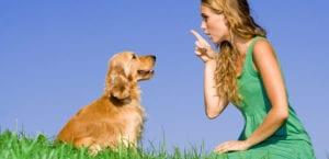 Educar a un perro adoptado