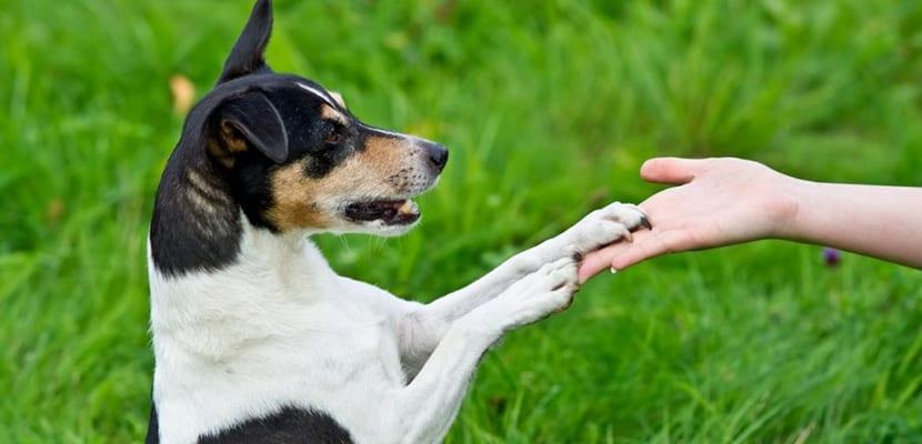 Educar a un perro adoptado con refuerzo positivo