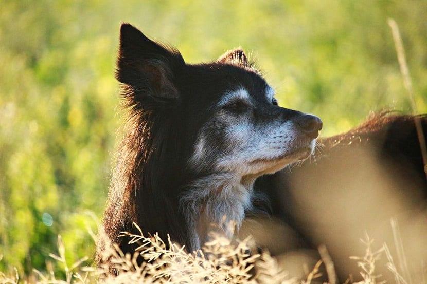 Cuida a tu perro de posibles enfermedades mortales