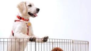 Un cachorro suele tardar tiempo en acostumbrase a su nuevo hogar