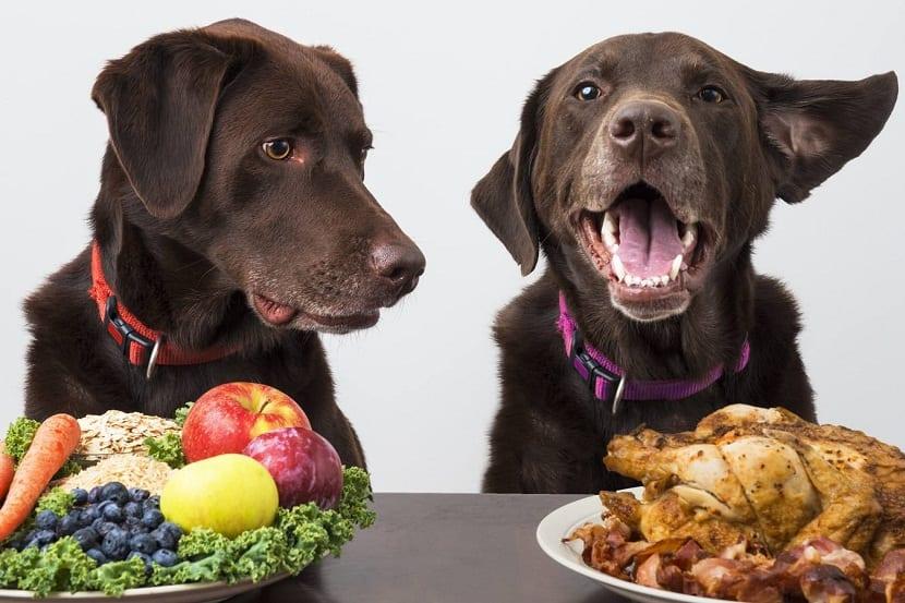 Las proteínas tienen diversas funciones dentro del organismo de los perros