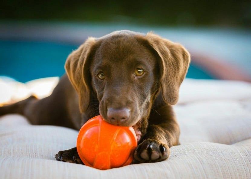 para que un cachorro esté agusto hay que ofrecerle seguridad