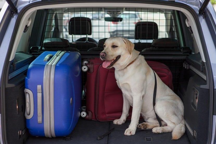 perro en maletero de coche preparado para salir de viaje