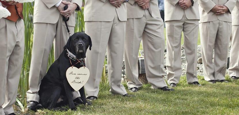 Perros en bodas