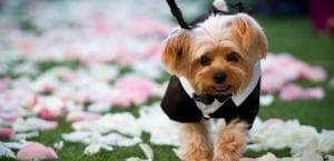 Perros en la ceremonia